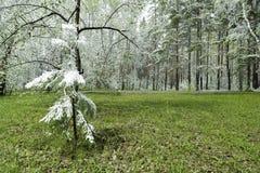 Grünblätter der Bäume und des Grases bedeckt mit Schnee Lizenzfreie Stockbilder