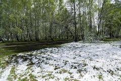 Grünblätter der Bäume und des Grases bedeckt mit Schnee Stockfotografie