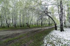 Grünblätter der Bäume und des Grases bedeckt mit Schnee Stockbilder
