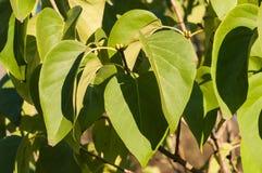 Grünblätter in der Herbstsonne Lizenzfreie Stockfotos