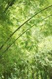 Grünblätter des Bambusses Lizenzfreie Stockfotografie