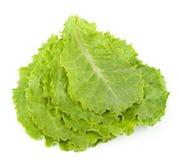 Grünblätter des Kopfsalates Lizenzfreies Stockbild