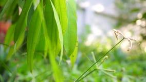Grünblätter, die sich weich bewegen stock video footage