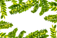 Grünblätter für Hintergrund Stockbilder