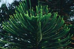 Grünblätter, Frühlingshintergrund Stockbild