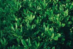 Grünblätter, Frühlingshintergrund Stockfotos