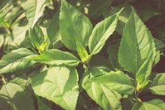 Grünblätter, Frühlingshintergrund Lizenzfreies Stockbild