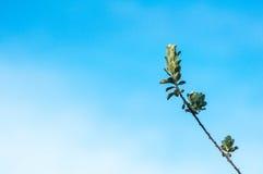 Grünblätter gegen blauen Himmel Stockfoto