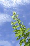 Grünblätter gegen den blauen Himmel Stockfotos