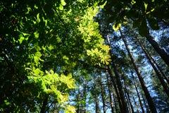 Grünblätter gegen einen blauen Himmel Stockbild