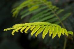 Grünblätter im Fokus stockfoto
