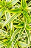 Grünblätter im Garten Stockfotografie