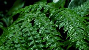 Grünblätter im tropischen Wald stock video footage