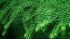 Grünblätter im tropischen Wald stock footage