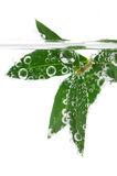 Grünblätter im Wasser stockfotografie