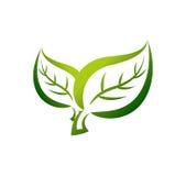 Grünblätter stockfotos