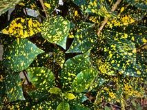 Grünblätter mit gelben Stellen stockfotografie