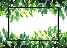 Grünblätter mit kreativem quadratischem Rahmenplan Auf weißem Hintergrund mit Kopienraum Stockfotos