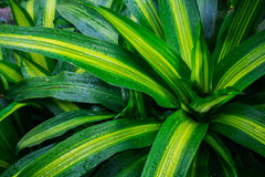 Grünblätter mit Tropfen Lizenzfreies Stockbild