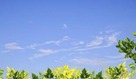 Grünblätter mit unscharfem Hintergrund des blauen Himmels Stockfoto