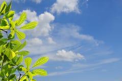 Grünblätter mit unscharfem Hintergrund des blauen Himmels Lizenzfreie Stockfotografie