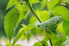 Grünblätter mit Wassertröpfchen Stockfotos