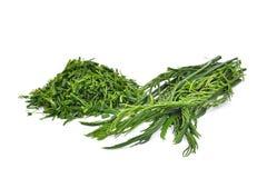 Grünblätter, senegalia pennata oder oder cha OM lokalisiert auf Weiß Lizenzfreie Stockfotografie