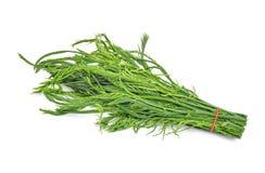 Grünblätter, senegalia pennata oder oder cha OM lokalisiert auf Weiß Stockfoto