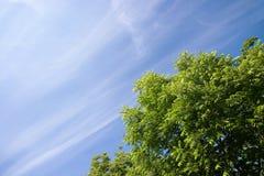 Grünblätter und blauer Himmel Stockfotos