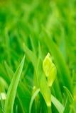Grünblätter und eine Knospeblende Stockfoto