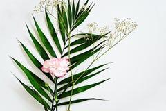 Grünblätter und -gartennelke blühen mit rosa Rändern auf Weiß lizenzfreie stockbilder