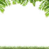 Grünblätter und grünes Gras lokalisiert auf weißem Hintergrund Stockfotos