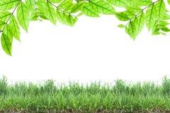 Grünblätter und grünes Gras lokalisiert auf weißem Hintergrund Lizenzfreie Stockfotografie