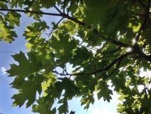 Grünblätter und -himmel lizenzfreie stockfotos