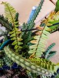 Grünblätter und -kaktus Lizenzfreies Stockfoto