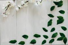Grünblätter und -kirschblüte verzweigen sich auf den weißen hölzernen Schreibtisch auf Hintergrund Flache Lage, Draufsicht Lizenzfreies Stockbild