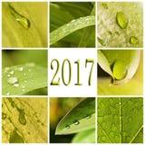 2017, Grünblätter und Regentropfencollage Stockbilder