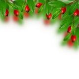 Grünblätter und rote Beeren stockfotografie