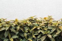 Grünblätter und weiße Wand Lizenzfreies Stockfoto