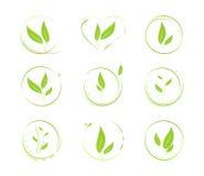 Grünblätter. Vektorelemente für Auslegung Lizenzfreie Stockfotos