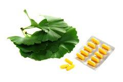 Grünblätter von Ginkgo biloba und von gelber Kapsel. Lizenzfreie Stockfotografie