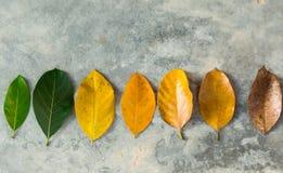 Grünblätter, zum von Blättern zu trocknen Lizenzfreies Stockbild