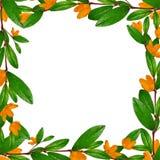 Grünblatt- und -blumenrahmen lizenzfreies stockbild