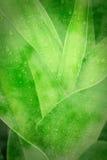 Grünbuchhintergrund Stockfotos