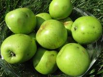 Grüne Äpfel ausgewählt für die Torte lizenzfreies stockfoto