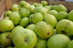 Grüne Äpfel betriebsbereit zum Verkauf Stockfoto