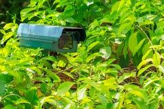 Grüne Überwachungskamera Stockfotos