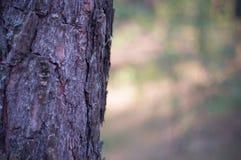 Grüne Abstraktion des Hintergrundes Landschaftsdes Koniferenlaubs an einem warmen Sommertag Lizenzfreies Stockbild