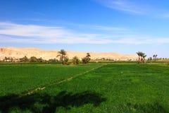 Grüne Ackerland- und Wüstenberge in Luxor, Ägypten Stockfotografie