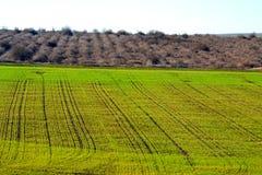 Grüne Ackerlandlandschaft Stockbilder